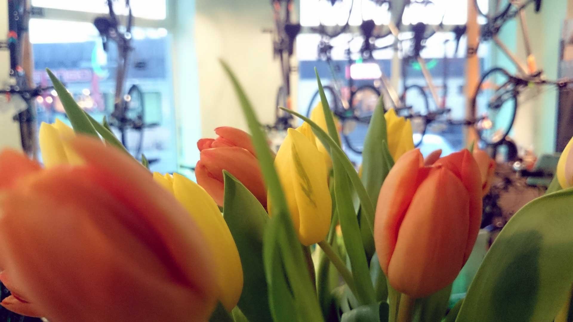 Fahrrad Checkliste fürs Frühjahr - Frühlingserwachen